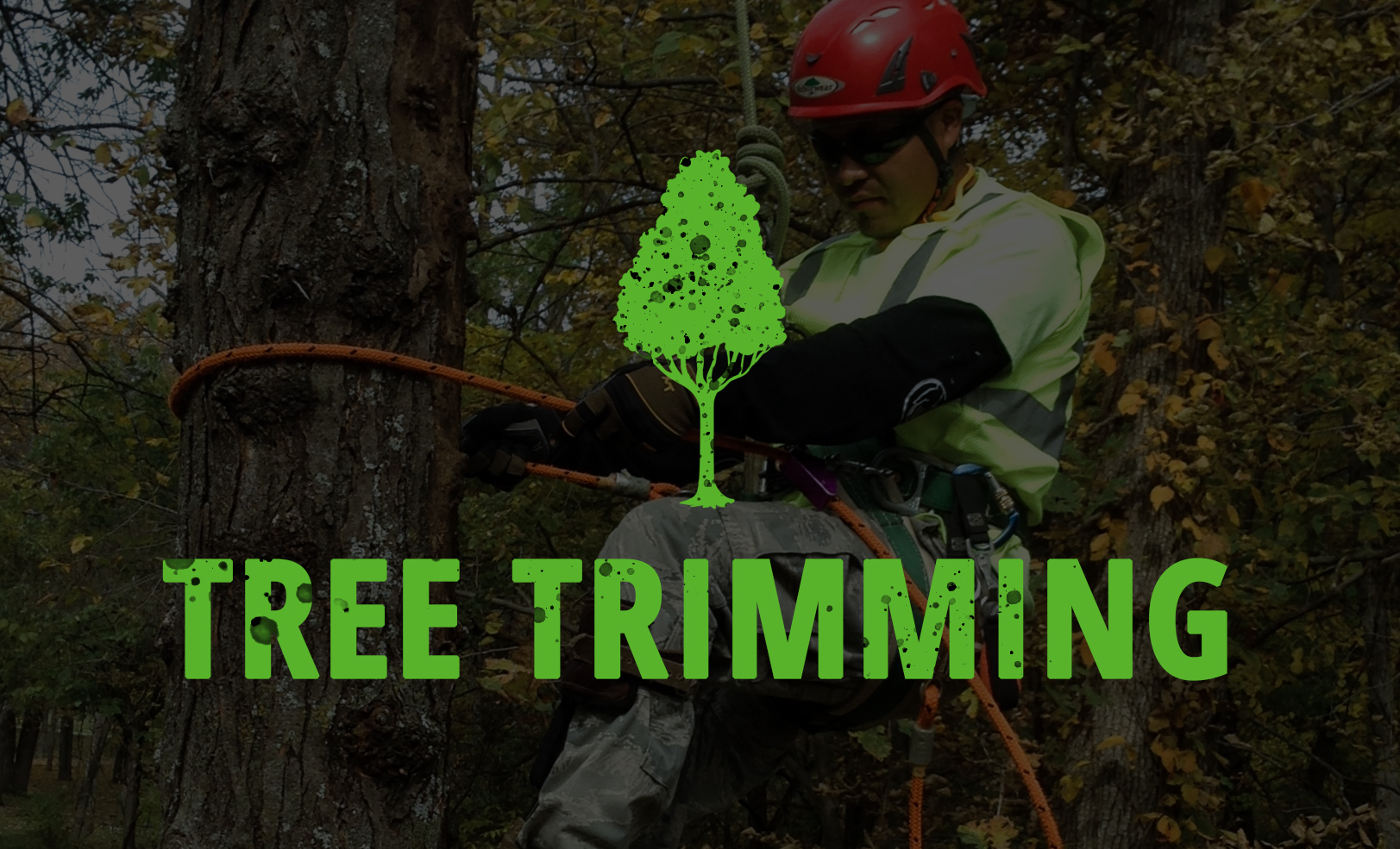 Tree Trimming Eastvale Ca